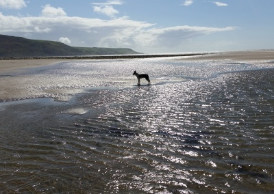 Miles of Dog friendly beaches