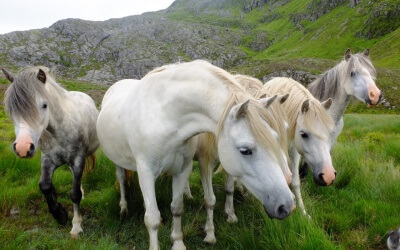Wild country, wild goats, wild horses