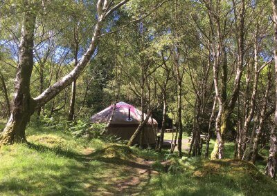 Large yurt in silver birch glade