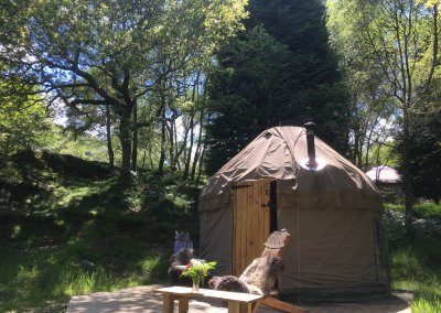 Yurt in oak woodland