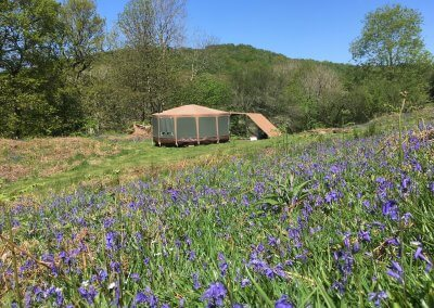 Idris in spring bluebells