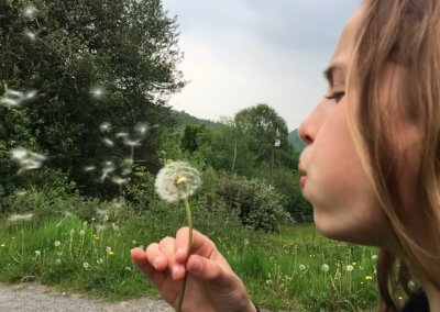 Dandelion clock blowing