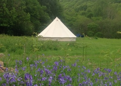 Camp among the bluebells