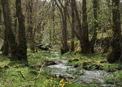 Graig Wen woods and stream