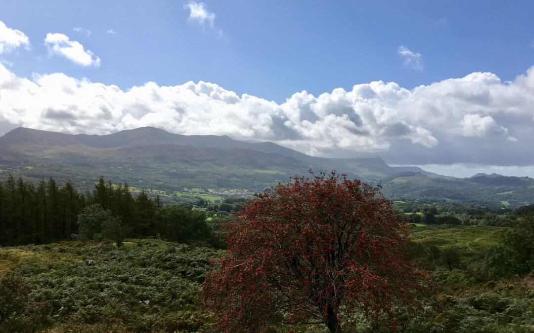 A walk around Foel Offrwm on the Nannau Estate