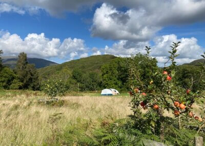 Tent and orchard